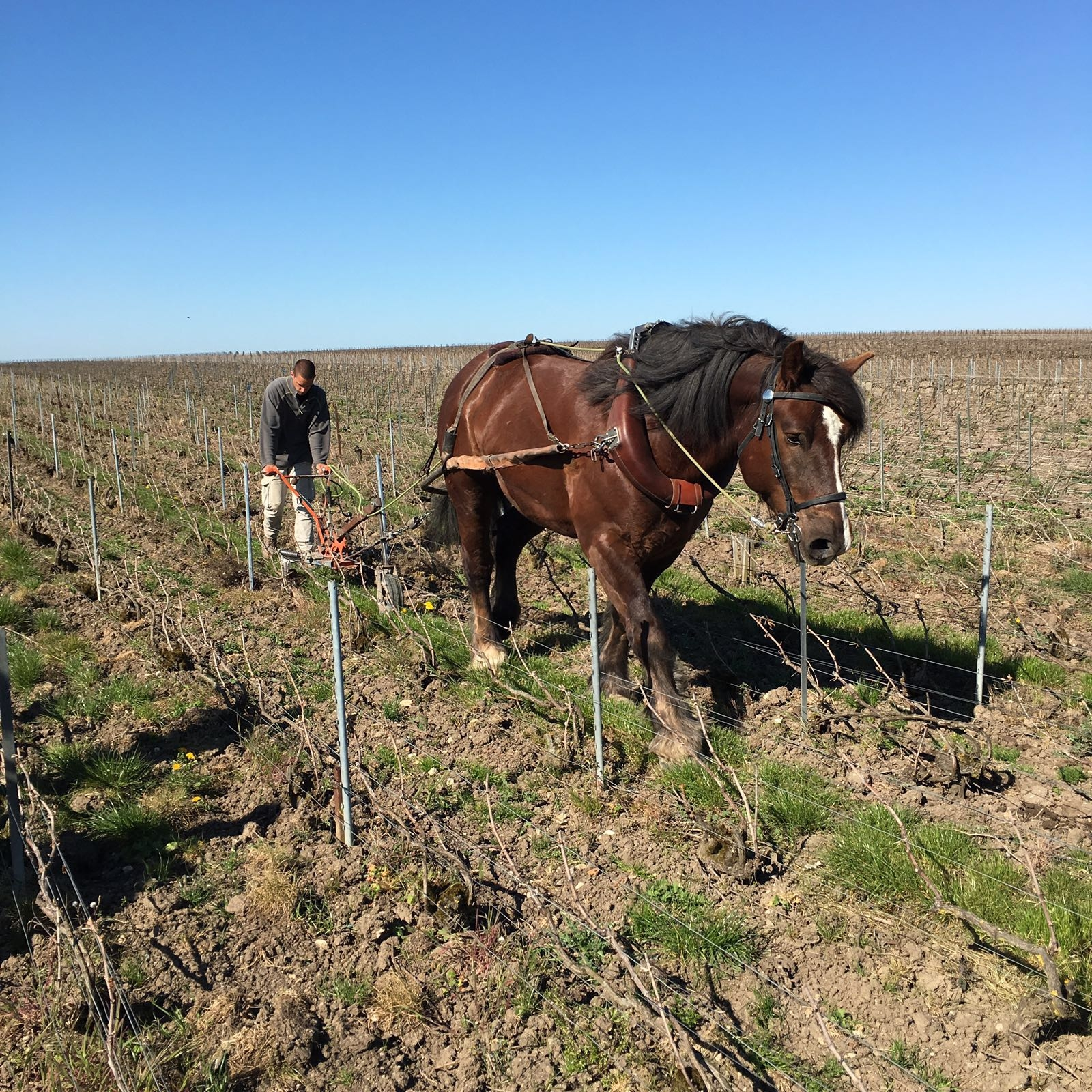 Mit dem Pferd über das Feld